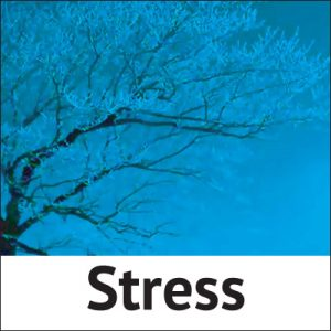 Stress control with Homeopathic treatment